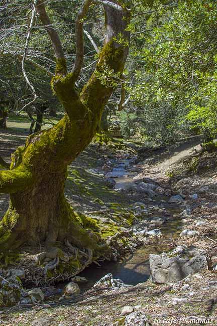 εκδρομή στο δάσος του Ρούβα