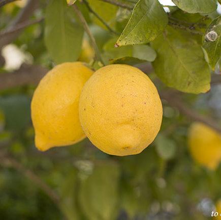 Όταν η ζωή σου δίνει λεμόνια… φτιάξε γλυκό!!