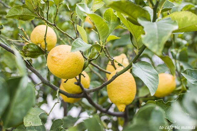 Όταν η ζωή σου δίνει λεμόνια… φτιάξε ρόφημα!!